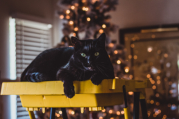 black cat sits on yellow ladder with christmas tree in background