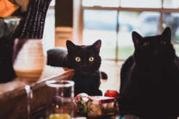 two black cats sit on the dining table